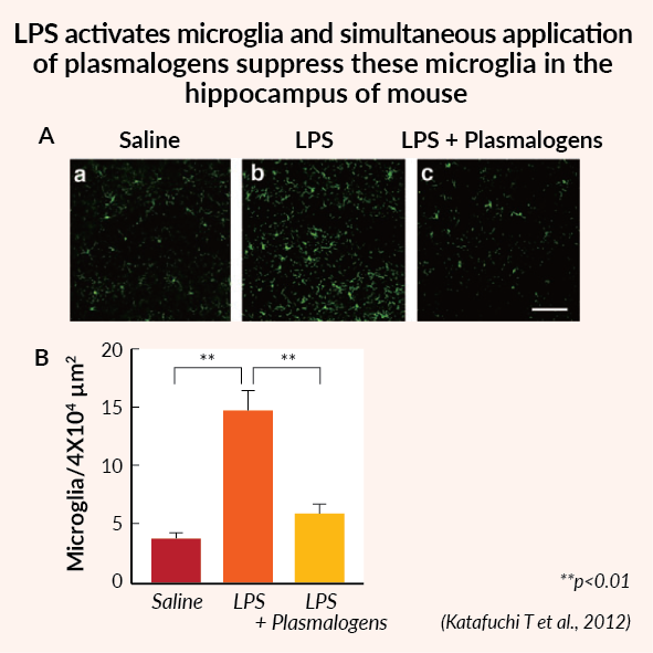 actions of plasmalogens - suppress microglia in the hippocampus of mouse
